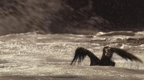 Великий поток / The Great Tide (2009)
