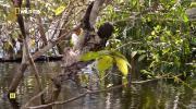 Скрытый мир Амазонки (2016) HDTVRip от Kaztorrents